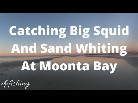 Moonta Bay Squid And Whiting Official Video