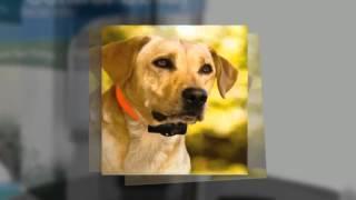 Bark Collar Information