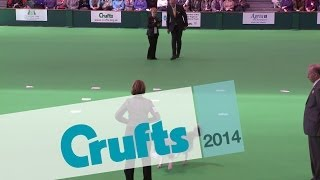 Obedience Dog Championships - Scents | Crufts 2014