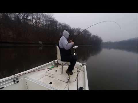 Winter Striper Fishing Housatonic River