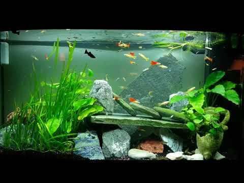 Livingroom Juwel rio 180 Aquarium.