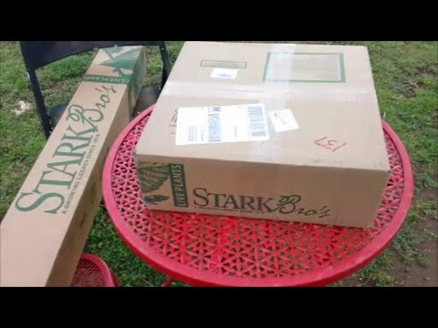 Unboxing Order From Stark Brother S Nursery