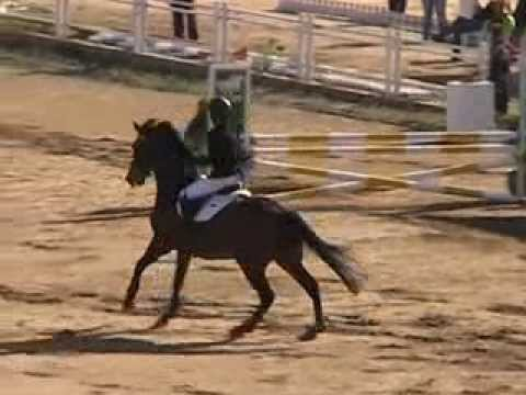 MOV01C Janine Khoo Southeast Asian Games 2013 Equestrian Jumping Team Round 1 Clear Round