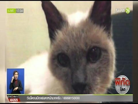 """""""สกูตเตอร์""""แมวอายุยืนสุดในโลกตายแล้วหลังฉลองวันเกิดครบ30ปี"""
