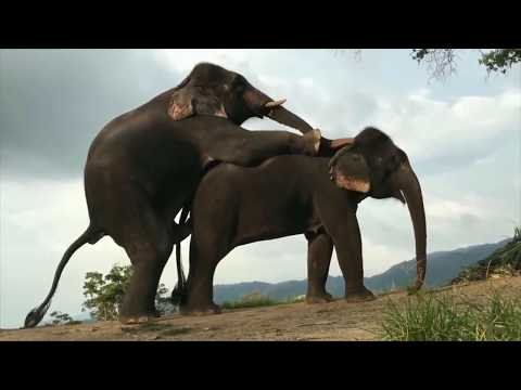Download Zebra Mating - Elephant Mating - Horse Mating - Animals Breeding Compilation ll Animals Mating