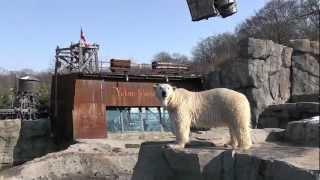 Bärenstarkes Wiedersehen in Yukon Bay im Erlebnis-Zoo Hannover