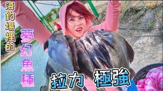 海釣場出現夢幻魚種⁉️拉力極強又好吃 女友爽翻天❗️ 大園晶鑽海釣場