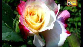 Tui Jato Phool - Ogo Badhu Sundari  - Asha Bhosle