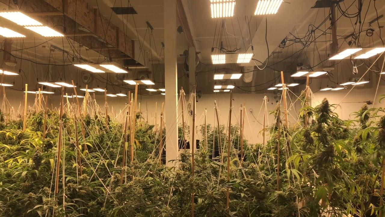 Marijuana Dispensary Cortez Colorado - The Herbal Alternative