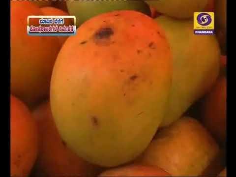 BC-21/8/17.1)Nutrients mngt in mango.2)Chrysanthemum flower cultivation.