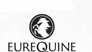 2018 Wild Dance Colt - Eurequine LLC