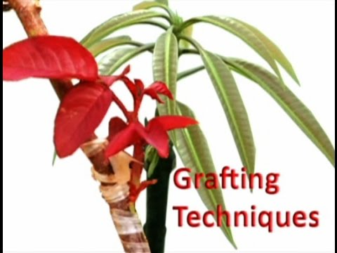 Grafting Techniques