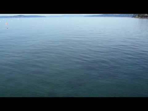 The calm waters of Puget Sound... with a surprise!