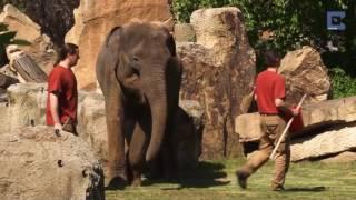 elefante le pide a los cuidadores de un zoolgico que despierten a su cra