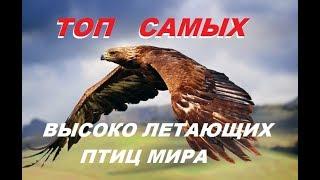 ТОП САМЫХ высоко летающих птиц мира