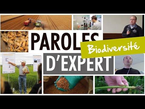 Paroles d'expert - Biodiversité : les pollinisateurs