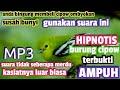 Suara Hipnotis Burung Cipow  Mp3 - Mp4 Download