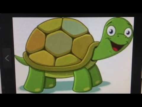 Twin Flames - 🐢The TURTLE wins the race 🐢