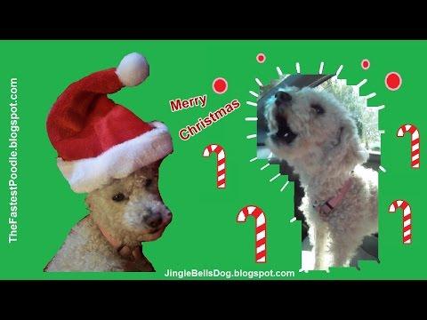 Jingle Bells Dogs Barking – Funny Christmas Card – Funny Christmas Music