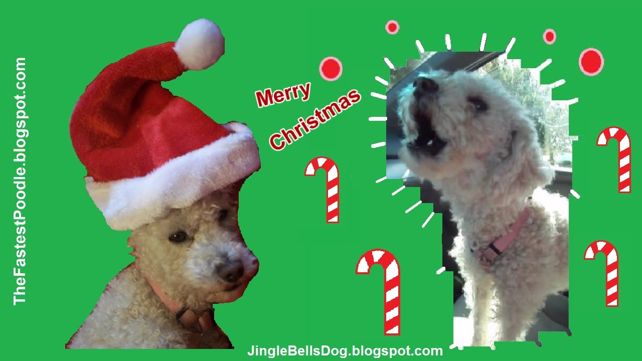 Jingle Bells Dogs Barking - Funny Christmas Card - Funny Christmas ...