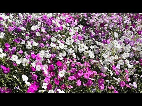 Цветы футаж фон