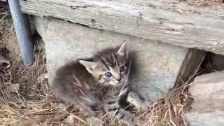 Scared kitten in the backyard
