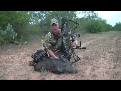 Javelina Attack - Bow Hunt