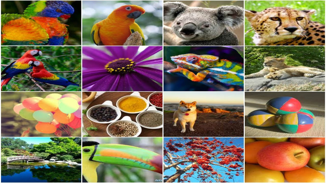 how to create a collage picture online for free many photos in one