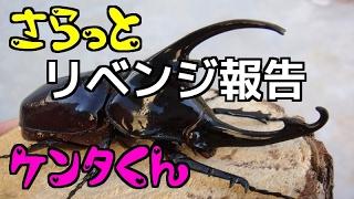 【クワガタ カブトムシ生活】 産卵セット 割り出し ケンタウルス オオカブト
