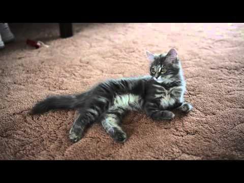 Kitten Born With No Bones In Her Front Legs Youtube