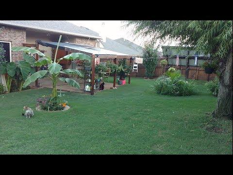 My suburbia backyard solar garden oasis (walk around)