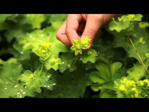 Installer des plantes pour sol argileux youtube for Soldes plantes