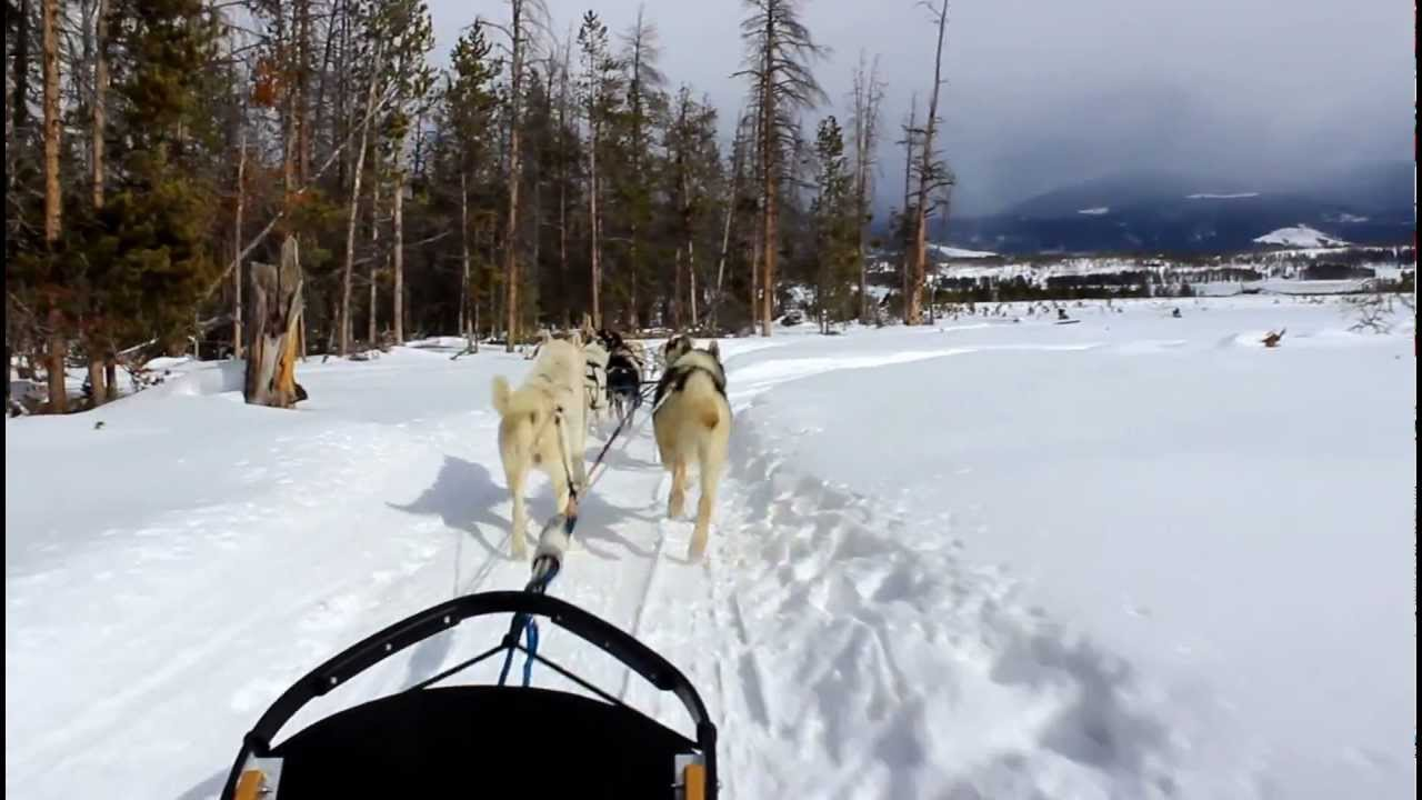 Dog Sled Rides of Winter Park - HeidiTown.com - YouTube