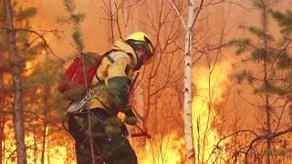 О сохранении лесов России