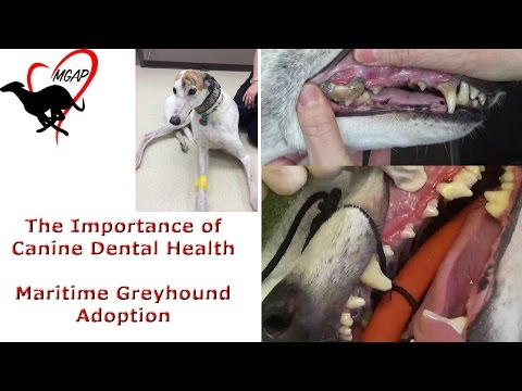 The Importance Of Canine Dental Health