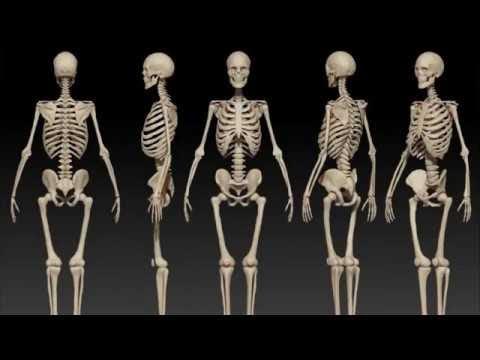 Skeleton Meditation: Spiritual Technology