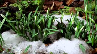 Beautiful Nature - Spring 1080p HD.mp4