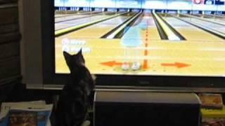 Kaka Chu the Wii Bowling Cat
