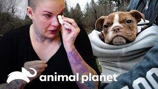 A despedida de Splat | Família ao Resgate | Animal Planet Brasil