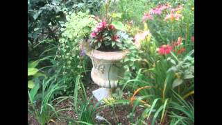 Flower gardening for beginners  l  easy gardening tips for beginners