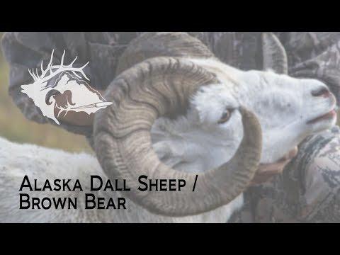 S10 E21 - Alaska Dall Sheep/Brown Bear