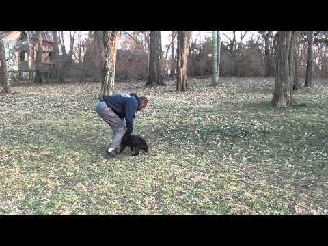 Guy Nashville Dog Trainer 091: Training A Miniature Poodle