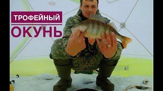 Трофейный окунь Зимняя рыбалка 2019 2020 Окунь на мормышку