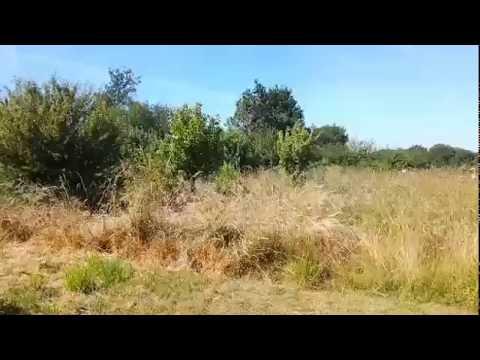 LES BIENFAITS DU VERGER EN FRICHE / Jardin facile BIO