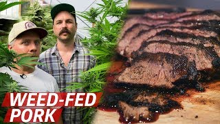 What Does Pork From Cannabis-Fed Pigs Taste Like? - Prime Time