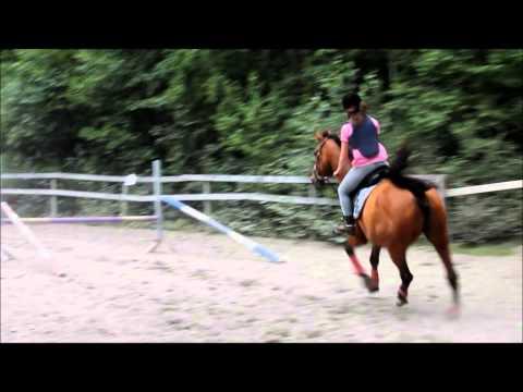 Marits rideskole kurs
