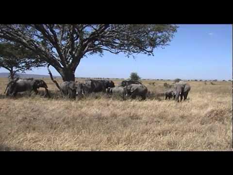 Our African Safari Part Three:  Serengetti