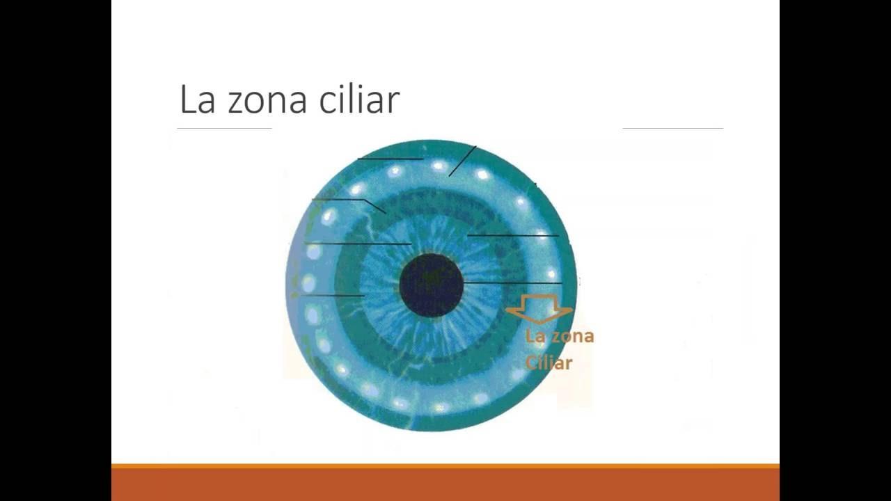 Mapa Circular del iris Zona Pupilar Zona Ciliar Anillos de estómago ...