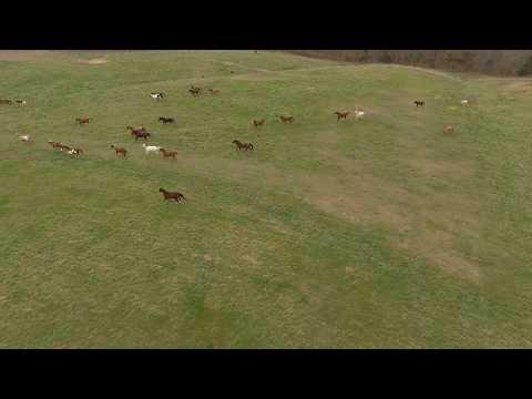 Mahoney Park  -  Nebraska  -  Running Horses