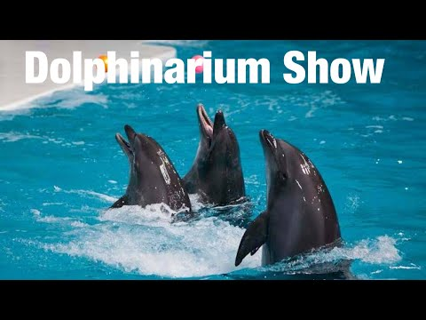 Dubai Dolphinarium Show